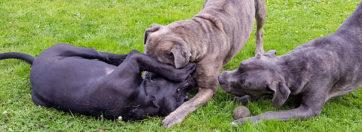 Kunterbunte Hundefotos